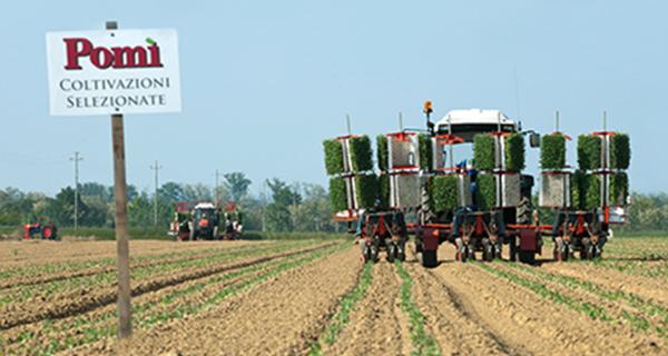 Simest sostiene all'estero il pomodoro Made in Italy
