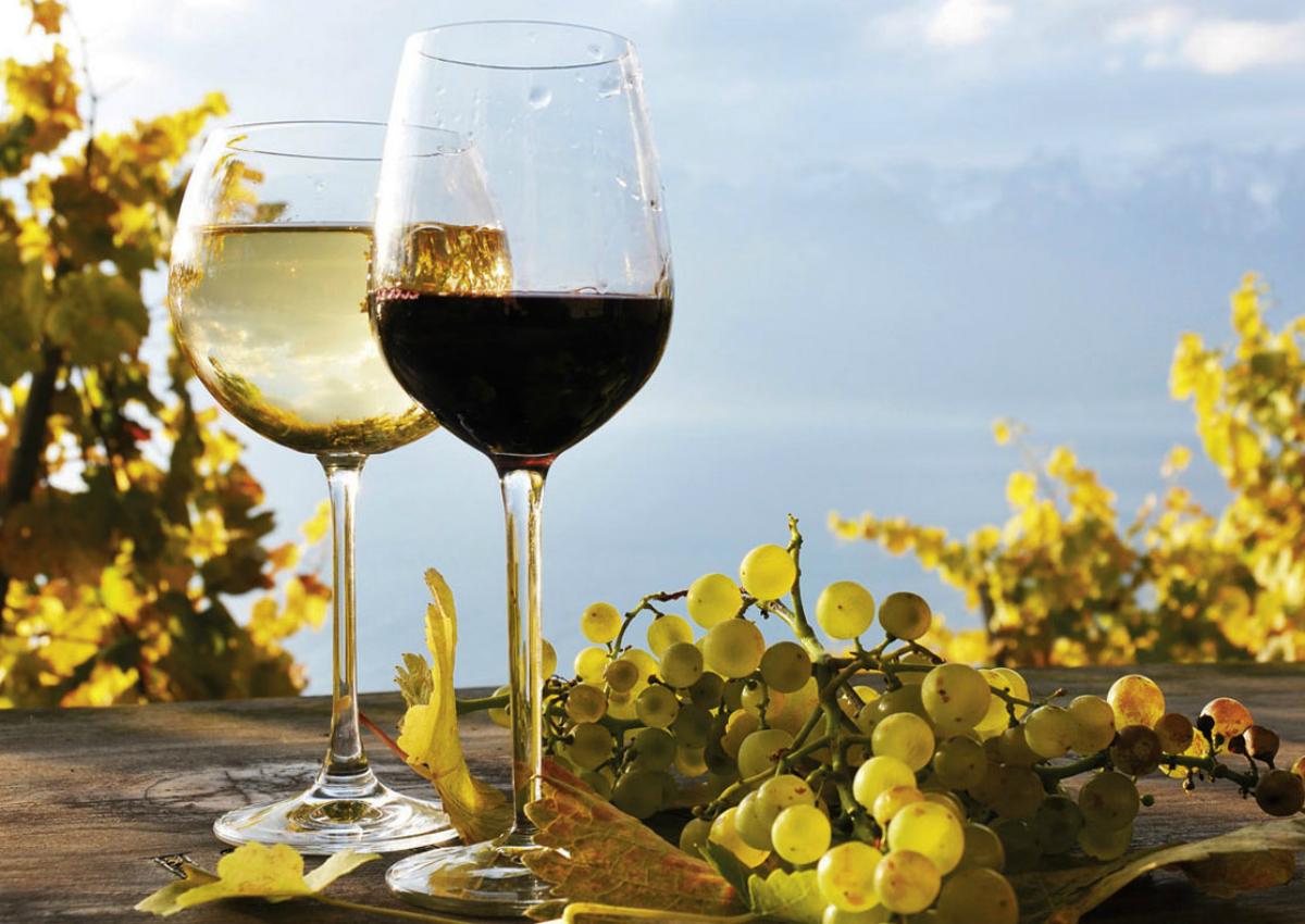 Vola l'export dei vini bio