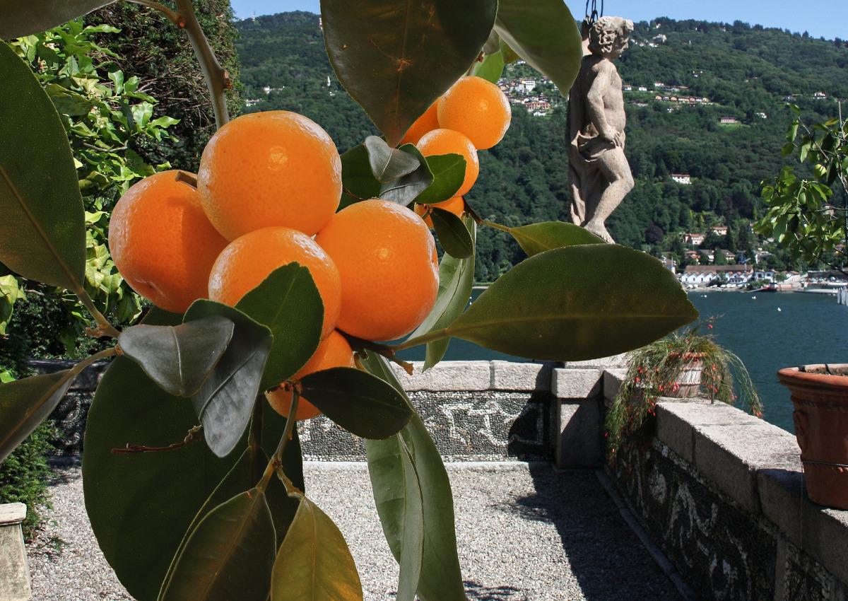 la grande bellezza italiana-ortofrutta-arance