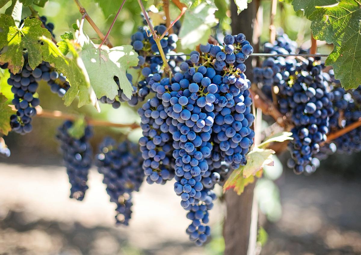 Export, il vino italiano rallenta la corsa